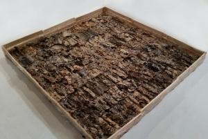 bark-mold